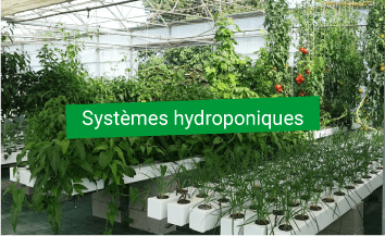 systeme hydroponie