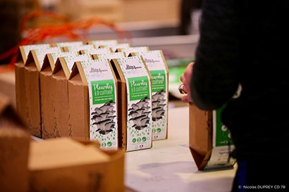 Boîtes à champignons de pleurotes