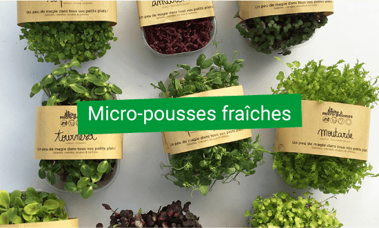 micro pousses fraiches d'UpCycle
