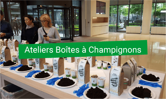 Atelier de confection de boîtes à champignons, éconoie circulaire