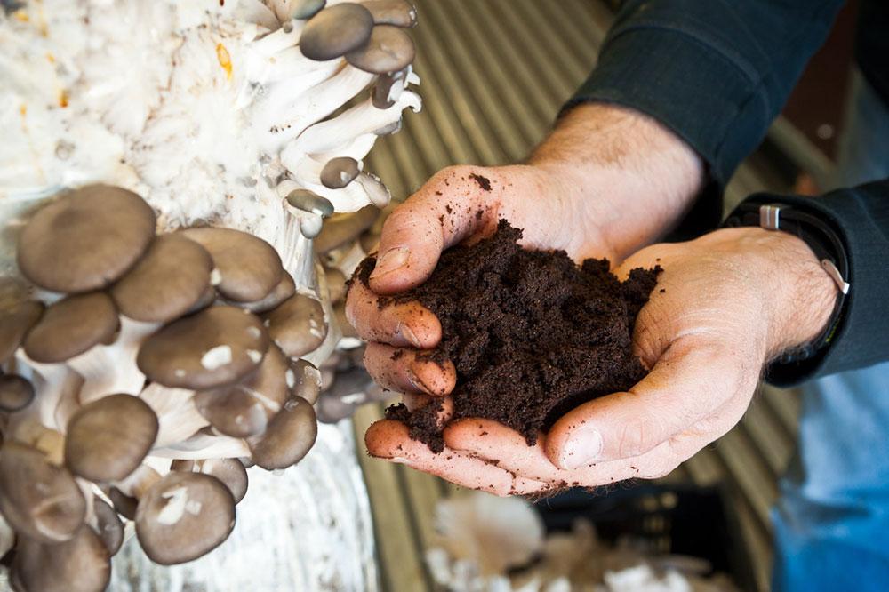 Collecter animer et valoriser les biodéchets du marc de café à la pleurote