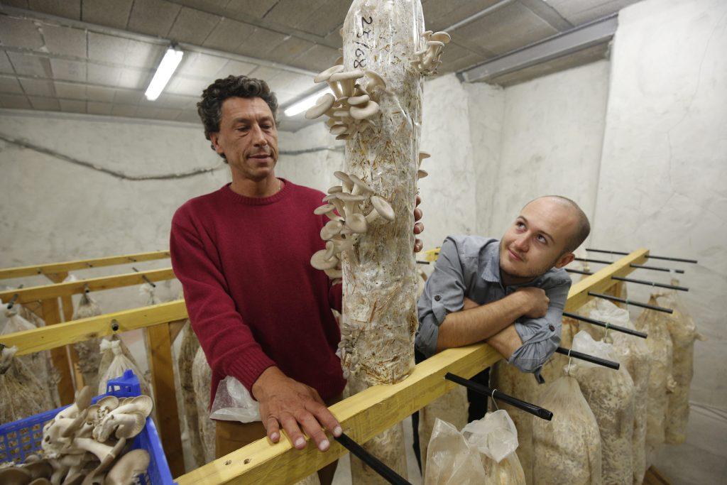Champignons de Marseille, pleurotes UpCycle