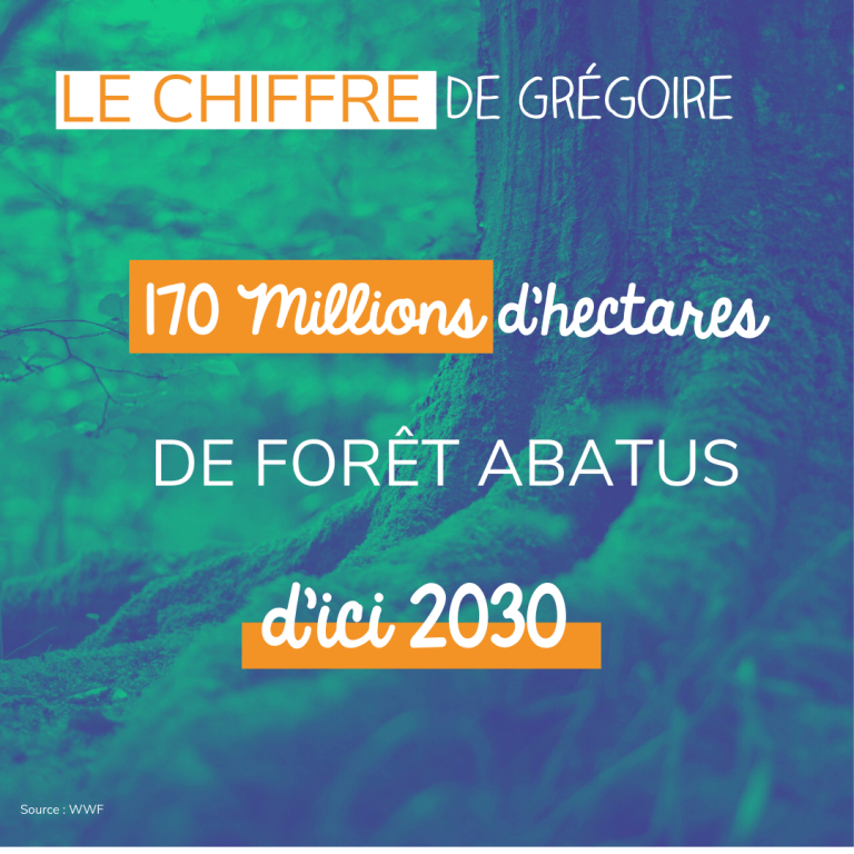 nombre hectares foret abatus