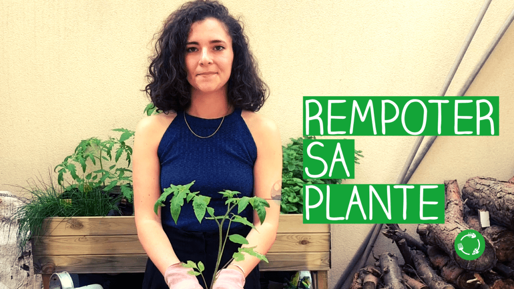 Tuto comment rempoter sa plante suite atelier jardinage circulaire UpCycle